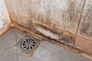 Bathroom Mold Problems